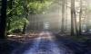 Грабитель и убийца шесть лет скрывался дикарем в лесах под Петербургом