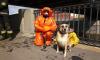 В Петербурге спасатели вытащили собаку из Обводного канала
