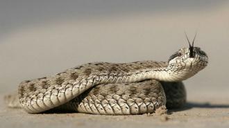 Петербуржец попал в реанимацию после укуса змеи