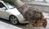 Упавшее на Васильевском острове дерево оборвало линии электропередач и пробило крыши двух иномарок.