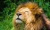 Прокуратура закрыла сайт, выставлявший на продажу краснокнижных животных