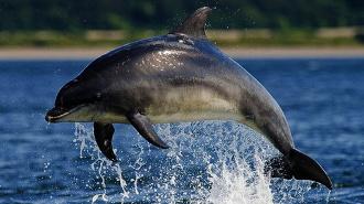 Керченские пограничники задержали браконьеров, охотившихся на дельфинов