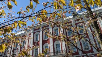 У главного здания СПбГУ зацвела сакура