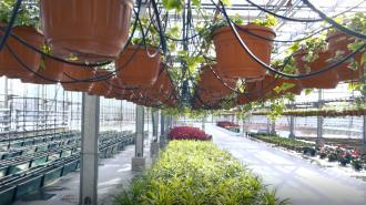 В Петербурге к ПМЭФ и Евро-2020 высадят почти полмиллиона цветов