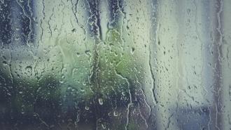 Дожди и грозы ожидаются в Ленобласти 16 мая