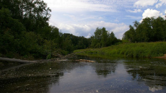Школьная экспедиция обнаружила источники загрязнения реки Войтоловки (Ленобласть)