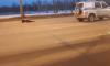 Пьяного мужчину, сбившего насмерть женщину, задержали в Петербурге