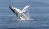 Пять туристов утонули у берегов Канады из-за кита-убийцы