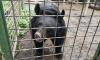 В Петербурге для 18 голодающих медведей собирают фрукты и овощи
