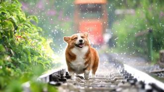 Сегодня в Петербурге брызнут дожди
