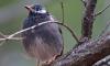 Не надо кормить пернатых: перелётные птицы возвращаются в Петербург