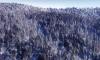 В Иркутске школьник замерз насмерть в лесу по дороге домой из школы