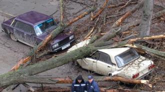 Водосточные трубы, деревья и кровля - краш-тест от стихии