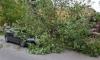 Ураганный ветер валит деревья в Петербурге