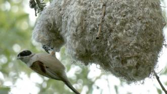 В Петербурге на деревьях заметили гнёзда-варежки