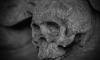 Школьник нашел в Петергофе скелет с золотыми зубами