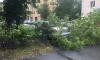 Сильный ветер валит деревья в Петербурге