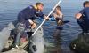 Добрый поступок: в Новороссийске молодой парень спас дельфина