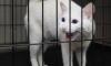 Эрмитажный кот Ахилл предсказал обладателя Кубка конфедераций