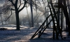Петербуржец наткнулся на труп в заброшенном ДОТе в лесу