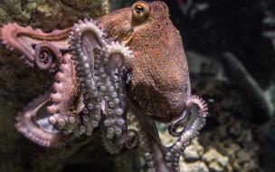 """Ученые: экстази заставляет осьминогов """"подкатывать"""" к сородичам"""