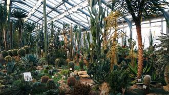 Вход в Ботанический сад Петра Великого с 1 мая подорожает