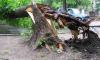 В Москве вырванное ураганом дерево убило женщину