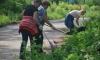 Жители Васильевского острова вступились за сквер на улице Одоевского
