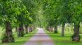 В Полюстровском парке посадили сто лип в честь 100-летия ...