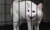 Глухой кот Ахилл вернется к должности оракула на Чемпионате мира 2018