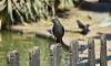 Петербуржцам запретили беспокоить птиц