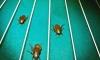 В Москве закрыт притон любителей тараканьих забегов