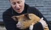 Дэвиду Кэмерону пригрозили публикацией фото его интима с мертвой головой свиньи