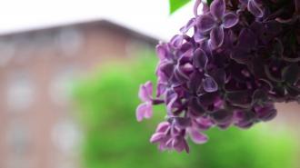 Петербуржцам обещали майские грозы и похолодание