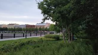 В петербургских парках и скверах высадят новые деревья