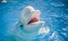 Белый кит Пузырь предсказал победу России в матче против Уругвая