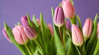 Петербургская таможня пропускает фуры с цветами к 8 марта