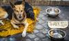 Петербуржец через суд добивается усыпления бездомных животных