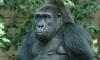 Поиск места для нового зоопарка: Как уравнять в правах гориллу и дятла?