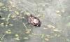 В парке на улице Чикистов гибнут утки