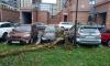 Штормовой ветер повалил деревья в нескольких районах Петербурга
