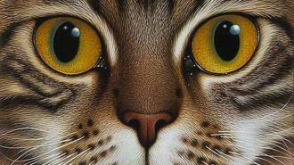 В Петербурге убийца со стажем цинично убил кота Жорика