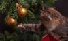Стало известно расписание новогодних и рождественских мероприятий в Выборге