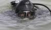 Трагедия во Фрунзенском районе: в карьере утонул человек