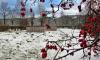 Балканское воинское кладбище приведут в порядок к 75-летию Победы