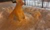 На Учительской неизвестный скульптор вылепил из снега образ символа года