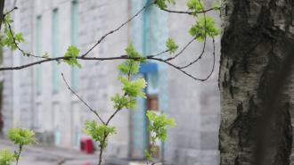 В Ленобласти 15 апреля ожидается до +11 градусов