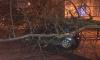 Петербург потерял три сотни деревьев из-за ночного шторма