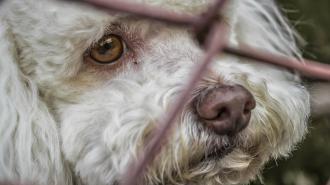 В Приморском районе мальчик подвесил за ошейник собаку