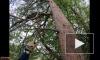 Петербургские волонтеры спасли кота, просидевшего на дереве сутки